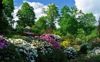 Экологическое воспитание и его цели